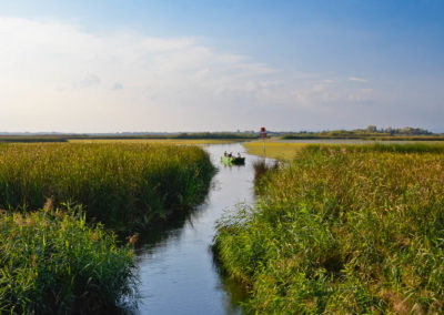 People boating on a mass body of water with reeds