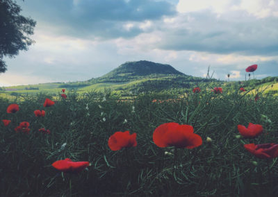 Poppies on a field, front of a hill